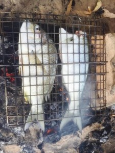 Cooking Fish at Wallaga Lakes